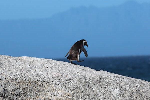 Pingouin | Biodiversité | Collectif Eco-Solidaire Corée Taïwan