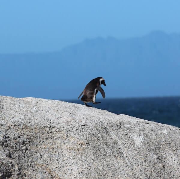 Pingouin   Biodiversité   Collectif Eco-Solidaire Corée Taïwan